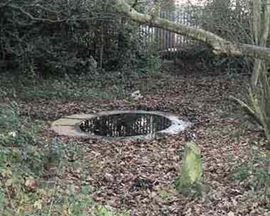 The Birch Well